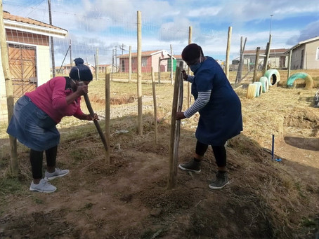 Growing your own! ECD centres grow vegetables for their children