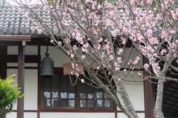Zendo e Sakura.JPG