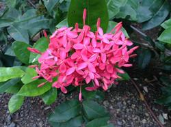 Bach Flowers