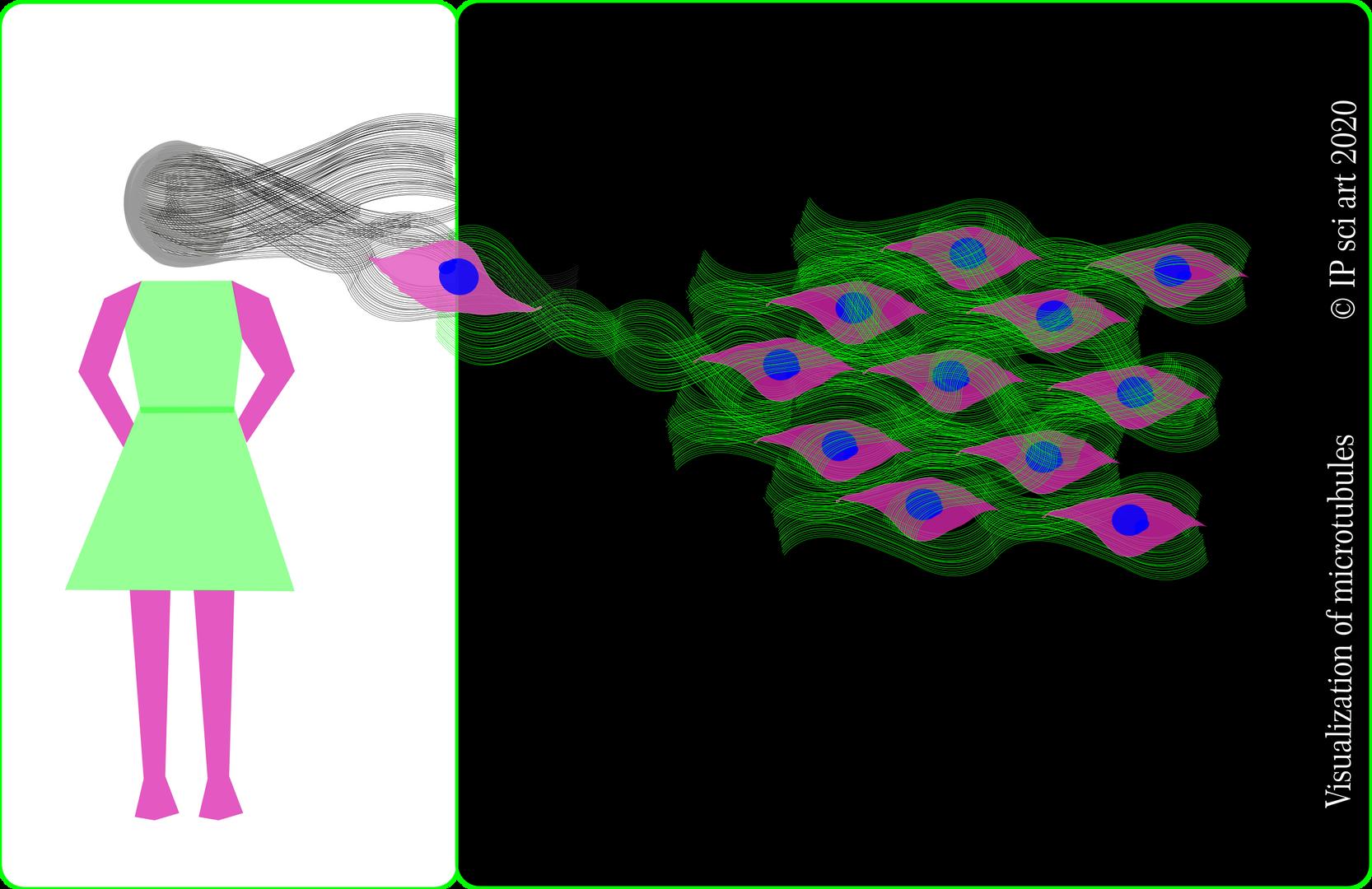 Visualization of microtubules