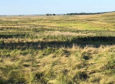 Rotational Grazing: A Win-Win Practice for Rancher's Bottom-line and the Environment?