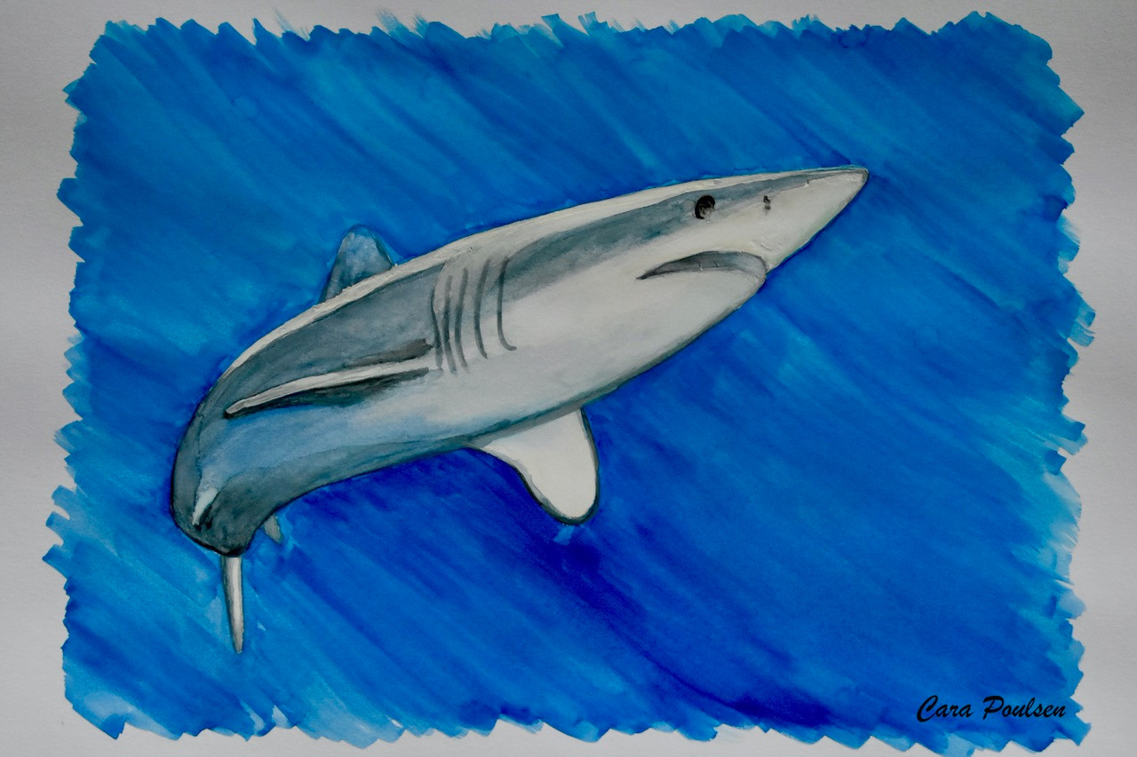 #AltSharkWeek, 2020, watercolor on cardstock
