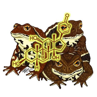 Gamabufagin (Bufo japonicus)