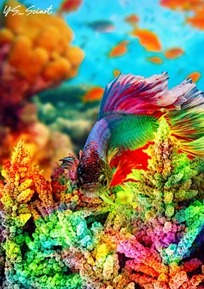 Micro corals