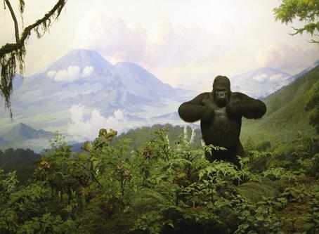 HABITAT DIORAMAS: Where art and nature meet