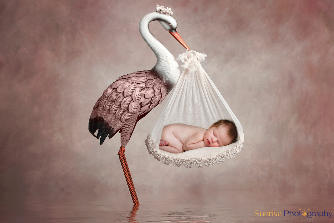 Stork digital background
