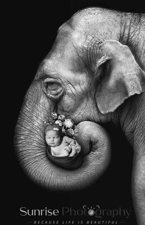 Elephant digital background