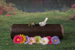 Frog and log