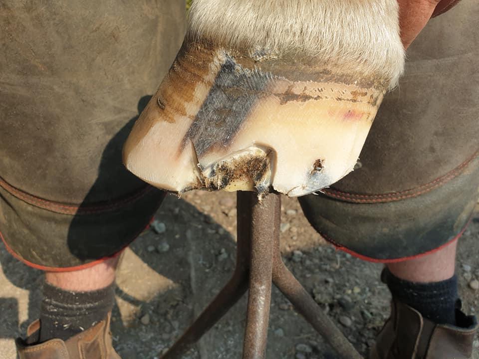 glushu polo horse 3