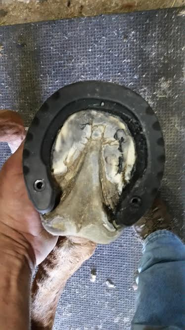 glushu glue on horse shoes