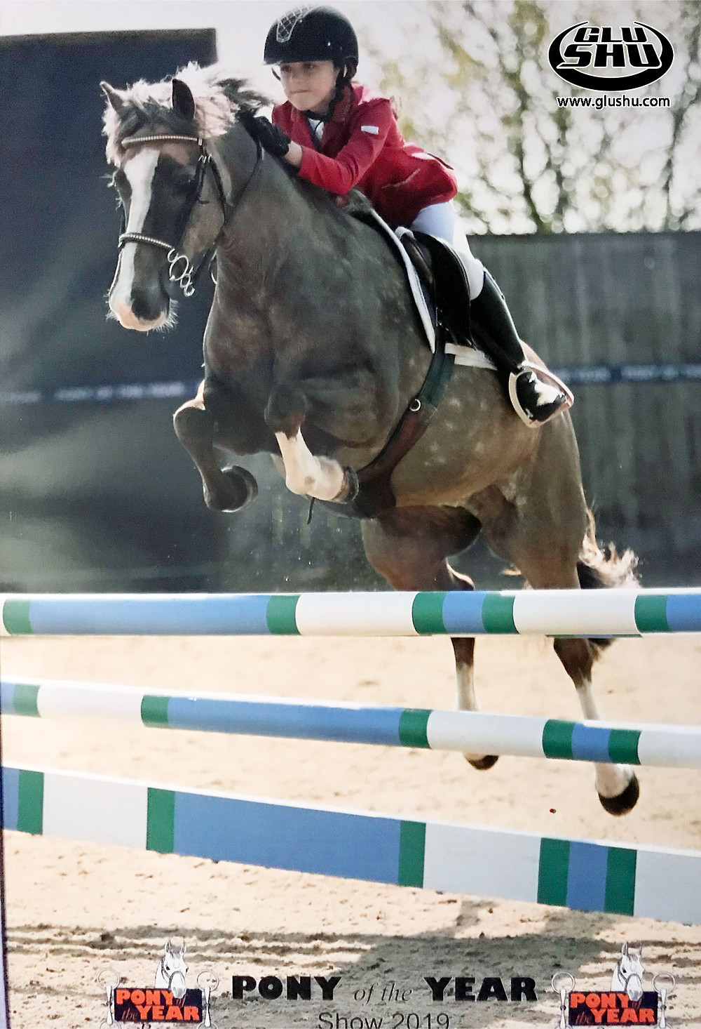 Sweetie show jumping in Glushu glue on horse shoes