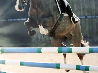 Glushu Show Jumping Winner.
