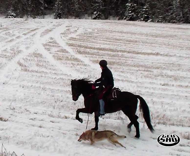 Endurance Riding in Glushu