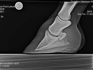 Farrier Report: Glushu for abscess and sore feet.