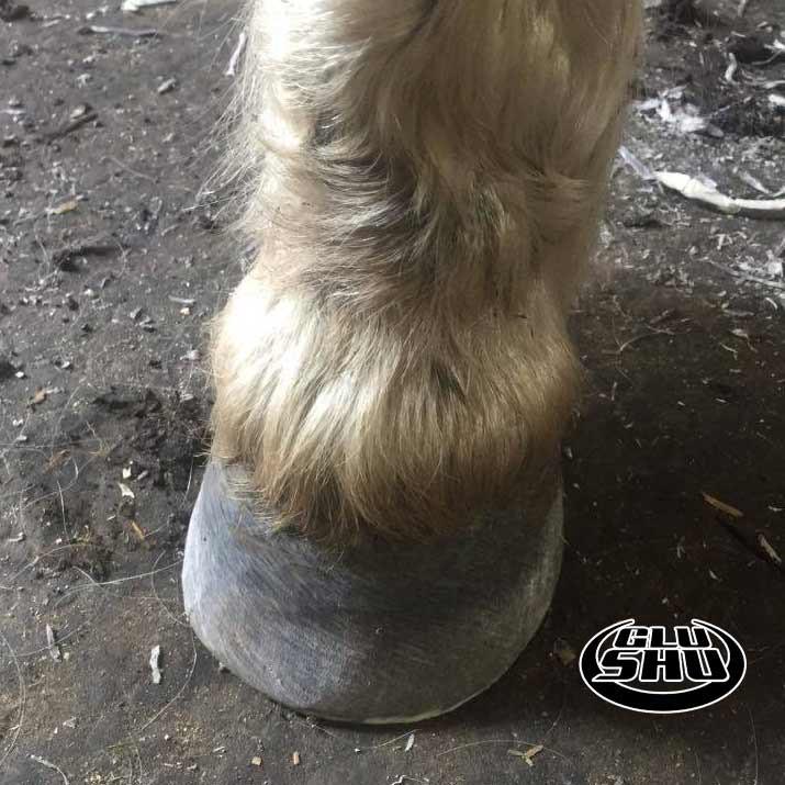 Kyle wearing Glushu glue on horse shoes