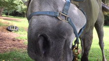 Owner Review: Glushu for fragile hooves.