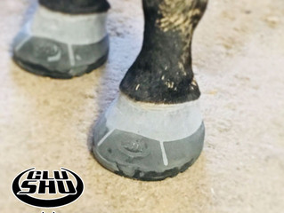 Farrier Review of Glushu.