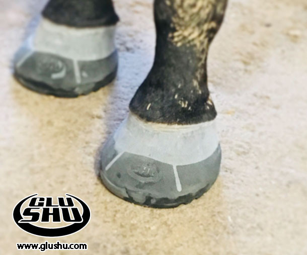 farrier review of Glushu glue on horse shoes