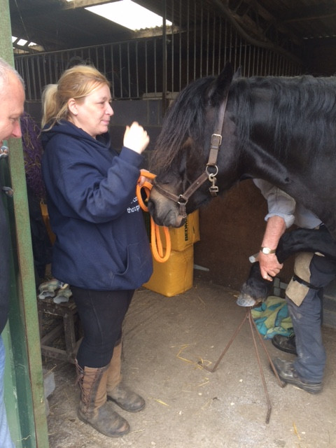 wanda being shoed with glushu glue on horse shoes