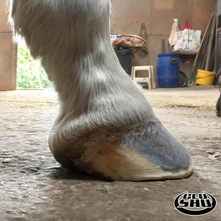 Glushu glue on horse shoes used to help horse with broken hoof