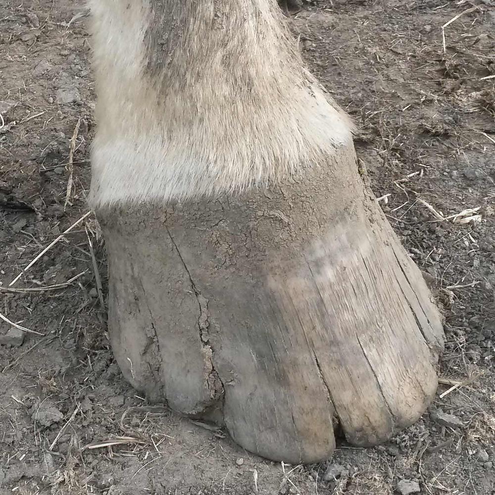 Ojays cracked feet before glushu fitting