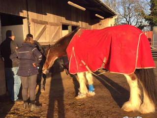 Glushu Horse Diaries: We meet Koop for initial consultation.