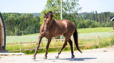 Farrier Report: Glushu for protection.