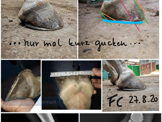 Farrier Report: Huf-Reha Team