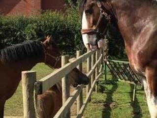 Glushu Horse Diaries: Koop day 4