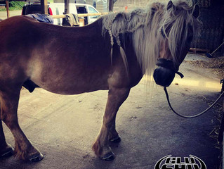 Glushu Farrier Review with modification and application video.