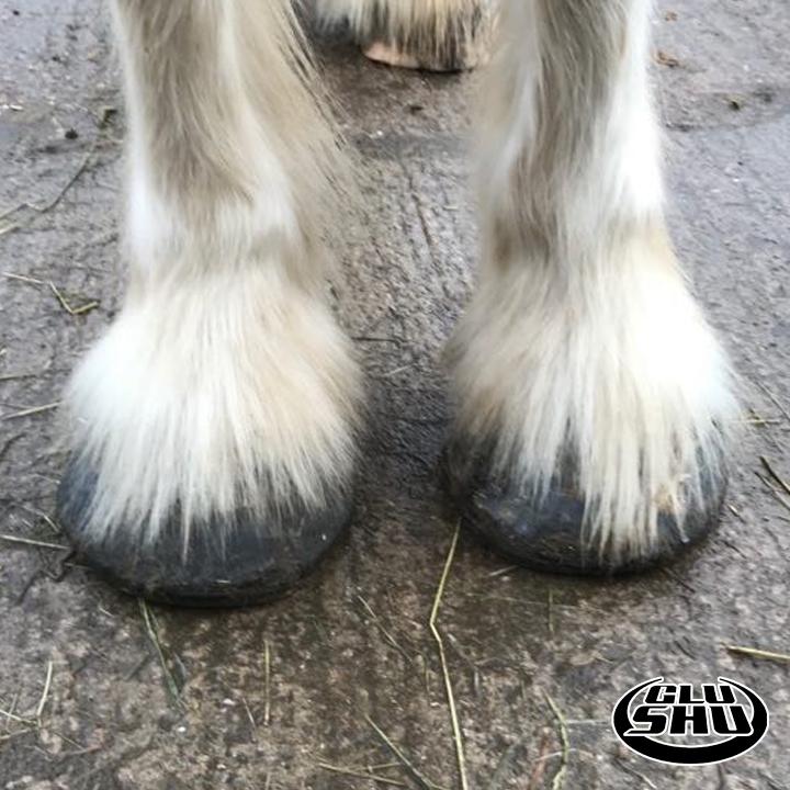 Koop Glushu glue on horse shoes trial
