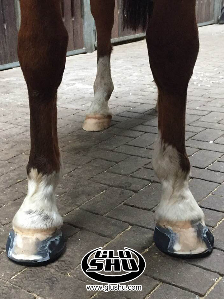glushu glue on horse shoes for sore hoof with broken walls