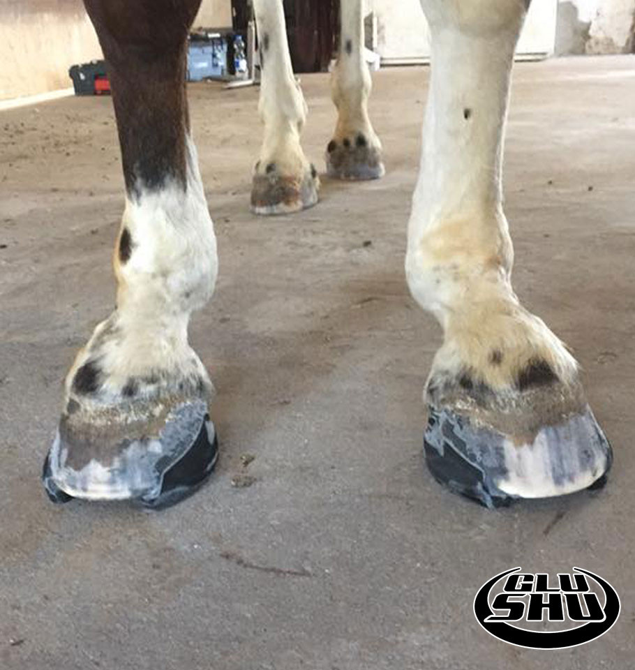modified glushu glue on horse shoes