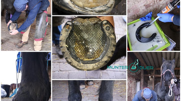Farrier Report from Huf-Reha Team