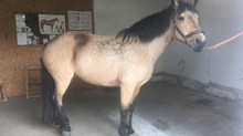 Farrier Report: Glushu for nervous lame horse.