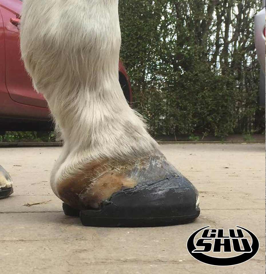 Asterix Glushu glue on horse shoes f