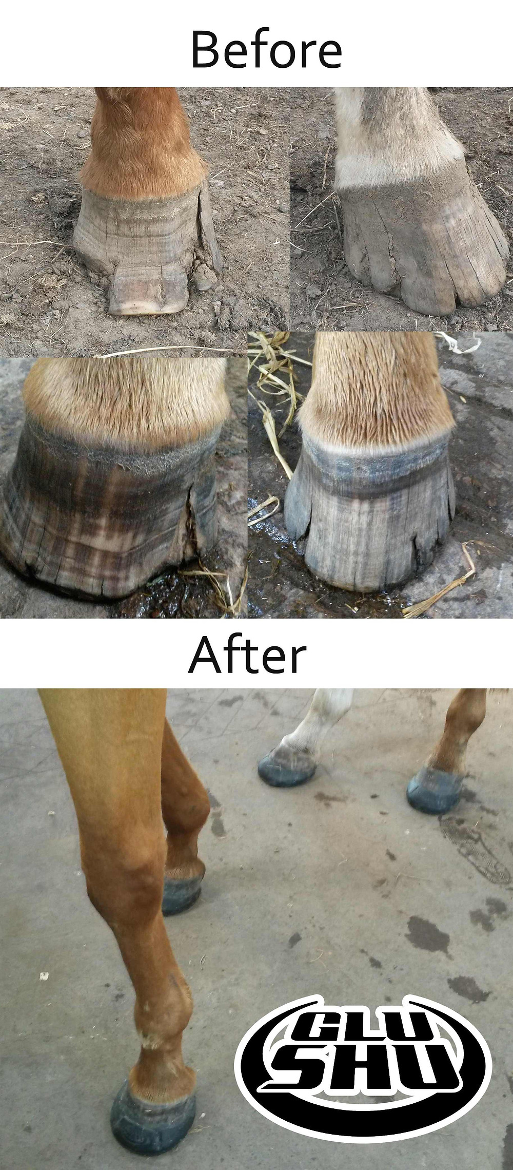 Hoof before and after Glushu glue on horse shoes