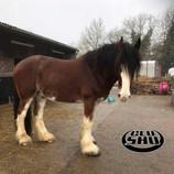 Horse Diaries: Koop 6 Weeks