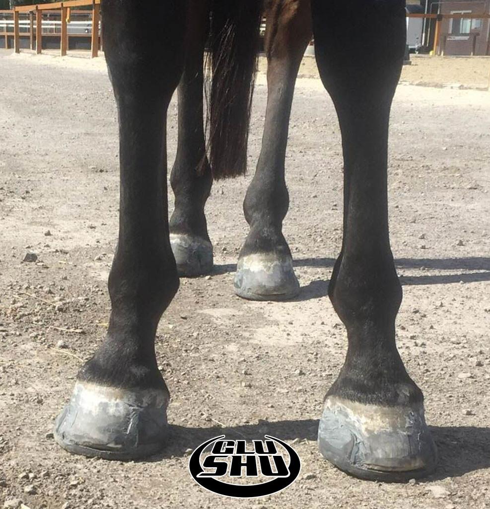 Glushu glue on horse shoes for lumbar problems.