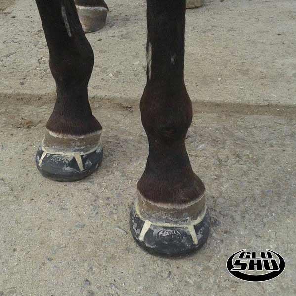 Glushu glue on horse shoes review