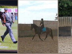 Update: Foal with angular limb deformity 4 years later