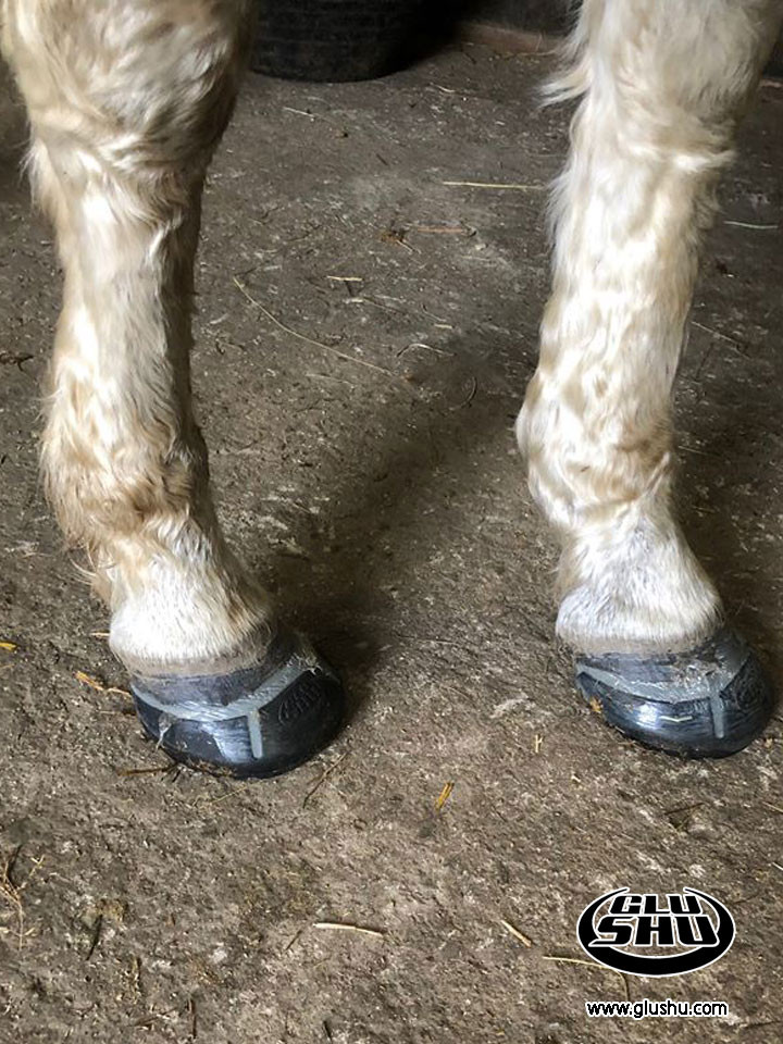 Flyte using glushu glue on horse shoes for brittle hooves