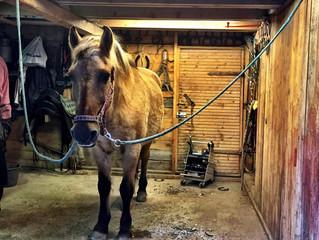 Olli - teaching an old horse new tricks :)