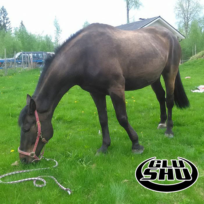 paola is so much more comfortable in Glushu glue on horse shoes.