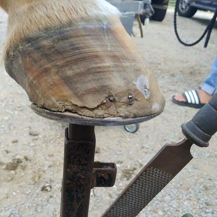 glushu for horses who cannot use nails