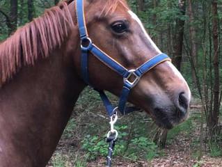 Glushu saves a horses life!