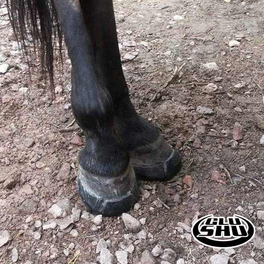 Mine in Glushu glue on horse shoes.
