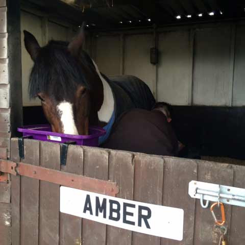 amber having her glushu glue on horse shoes fitted