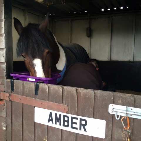 Amber wearing glushu glue on horse shoes
