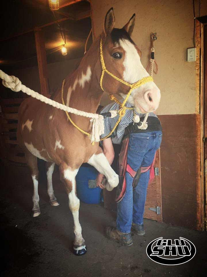 Dakota wearing glushu glue on horse shoes